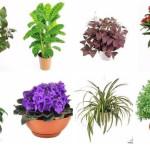 10 растений которые принесут в ваш дом любовь фото