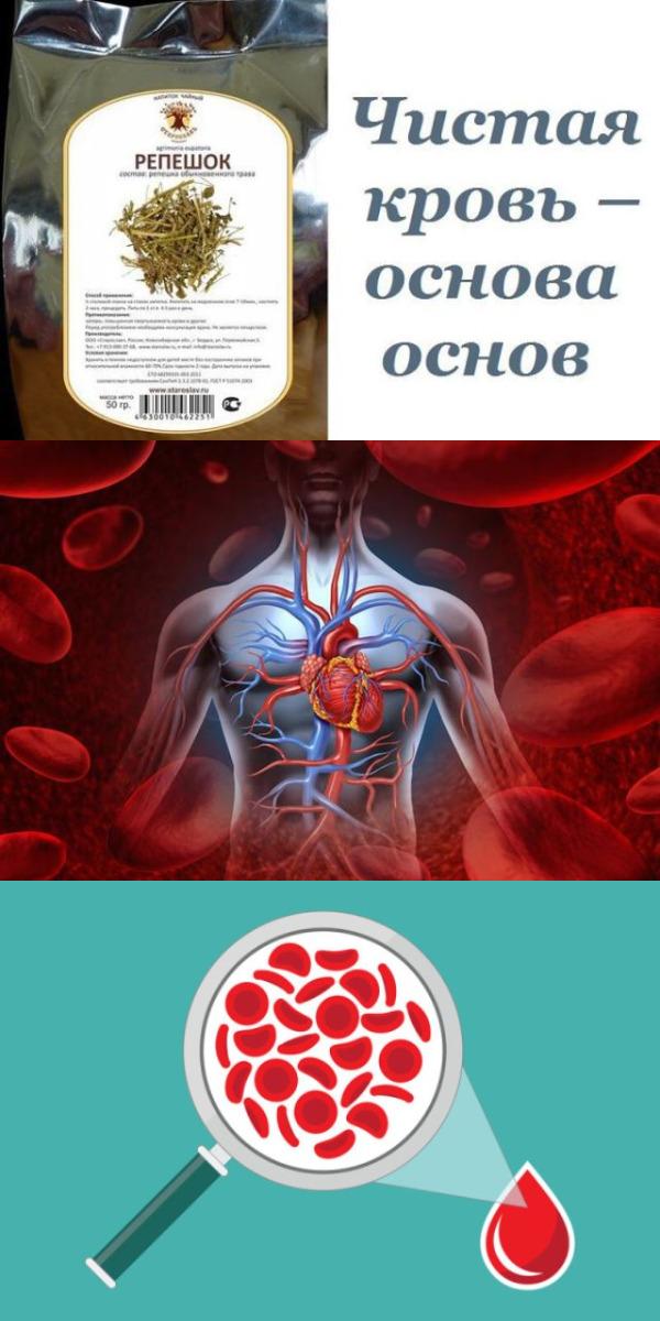 Чистая кровь – основа основ